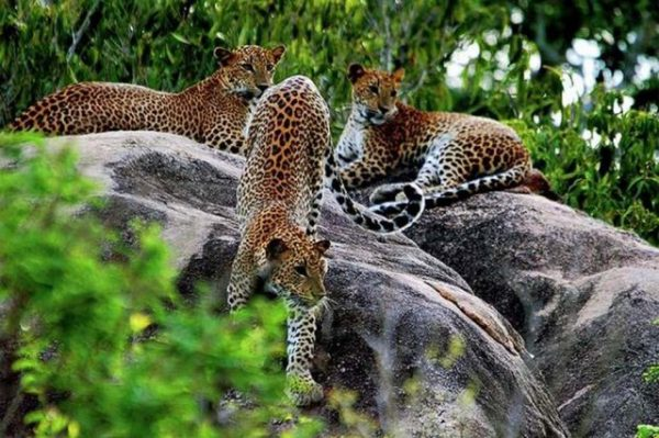 Yala-National-Park
