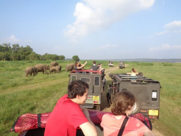 Minneriya National Park jeep Safari (4)
