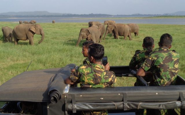 Minneriya National Park Safari (16)
