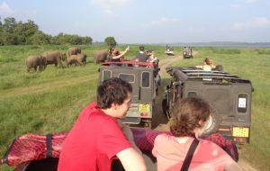 Minneriya National Park Safari (19)