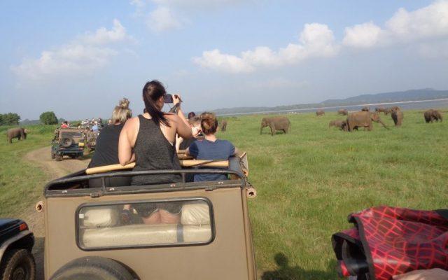 Minneriya half day Safari