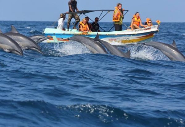 Whale and Dolphin watch Trincomalee