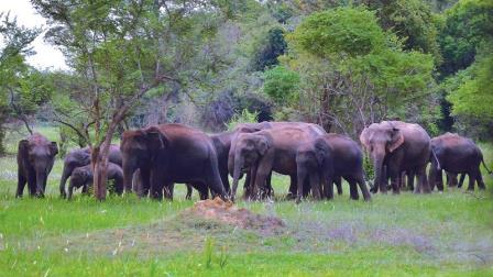 Wasgamuwa-National-Park1